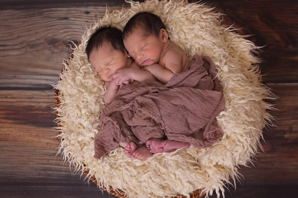 Twins in a nest