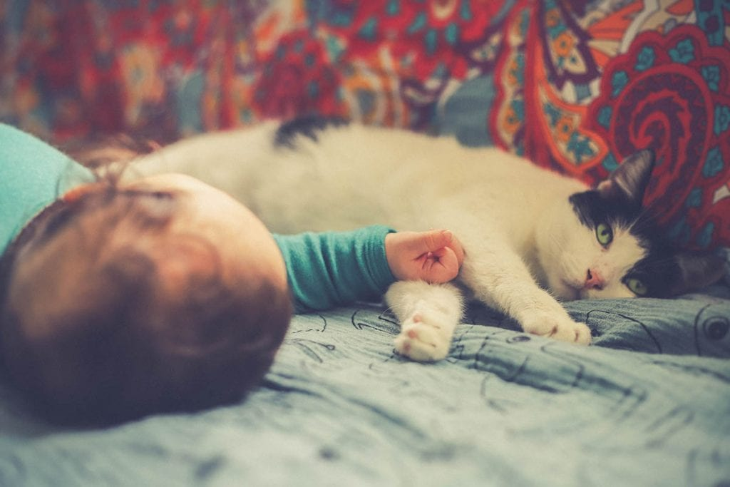 baby and a cat in a bed